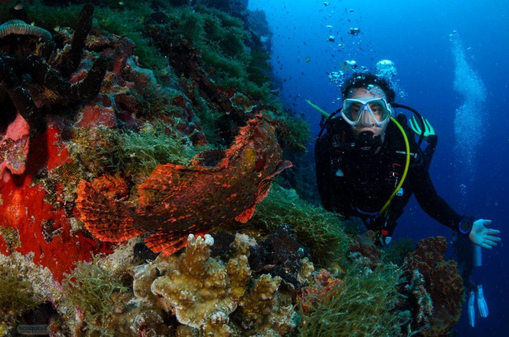 fun-diving-seaquest-dive-center